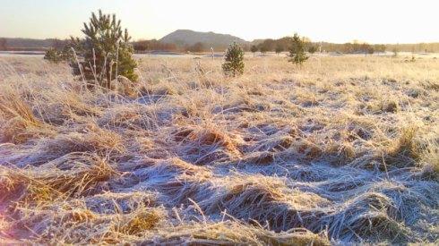 morgonfrost
