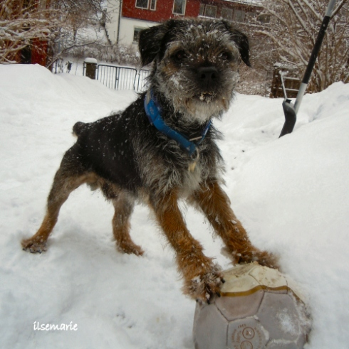 snowlek6
