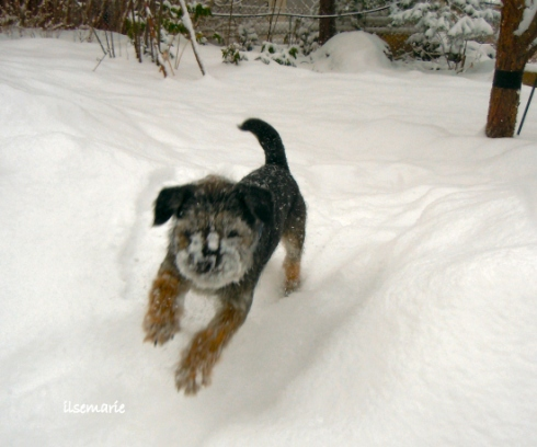 snowlek9